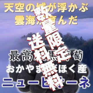 日本一の高級黒ぶどう 岡山びほく産ニューピオーネ1kg以上2房(フルーツ)