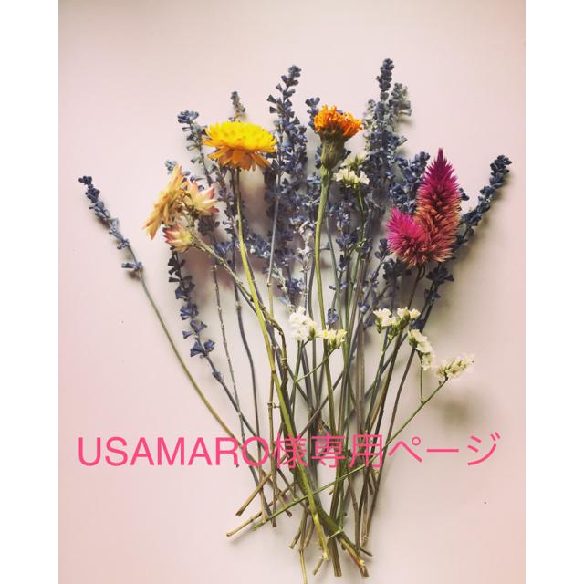 【増量!】ドライフラワー花材 ハンドメイドのフラワー/ガーデン(ドライフラワー)の商品写真