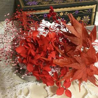⑥紅葉 ハーバリウム 花材セット(プリザーブドフラワー)