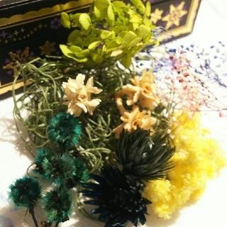 ⑧ボタニカル ハーバリウム 花材セット (プリザーブドフラワー)
