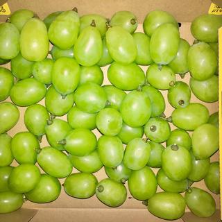 1キロ粒売り  💚シャインマスカット💚  『フルーツ王国おかやま』から