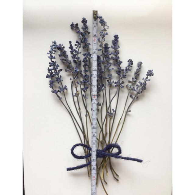 【お値下げしました】☆ドライフラワー花材☆ ハンドメイドのフラワー/ガーデン(ドライフラワー)の商品写真