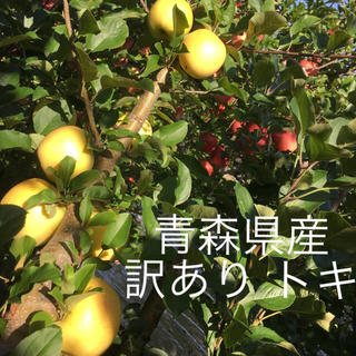 りんご  トキ 青森県産 訳あり 大人気(フルーツ)