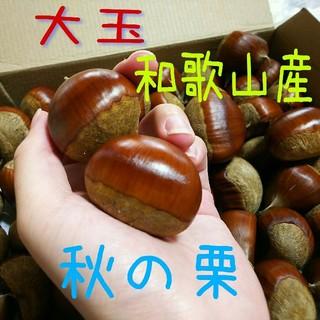 9/30収穫予定★ 栗 大玉!1.3キロ! 和歌山産 種類:銀寄(野菜)