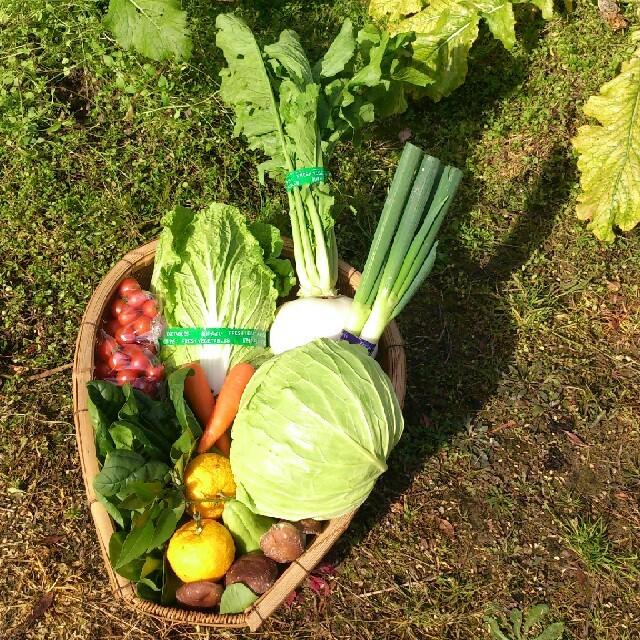 ちゅらは様 専用ページ 食品/飲料/酒の食品(野菜)の商品写真