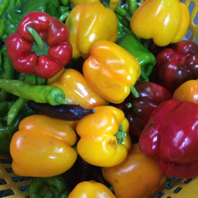 おまかせ無農薬野菜セット 食品/飲料/酒の食品(野菜)の商品写真