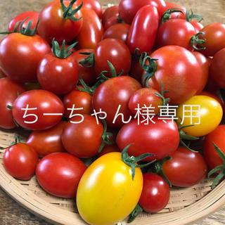 ちーちゃん様専用 ミニトマトミックス(野菜)