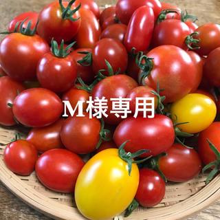 M様専用 ミニトマト ミックス(野菜)