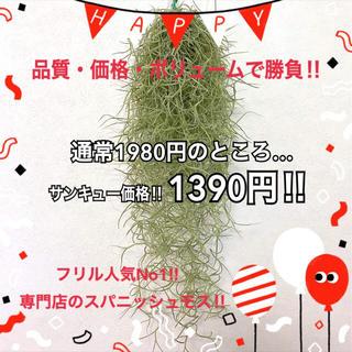 ⚠️感謝のありがとうセール⚠️大盛況‼️専門店のスパニッシュモス‼️送料無料(その他)