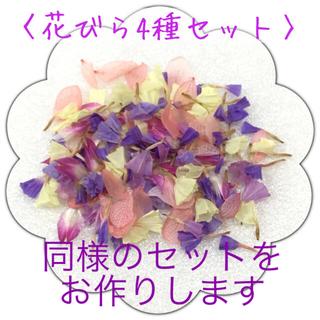 〈花びら4種セット〉スターチス・センニチコウ・紫陽花 ドライフラワー(ドライフラワー)