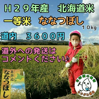 29年産 新米 農家直売 北海道米 ななつぼし  10kg(米/穀物)