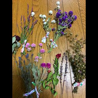 ドライフラワー 花材 ナチュラル系 (ドライフラワー)
