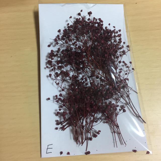プリザ、ソフトミニかすみ草ワインレッドE ハンドメイドのフラワー/ガーデン(プリザーブドフラワー)の商品写真