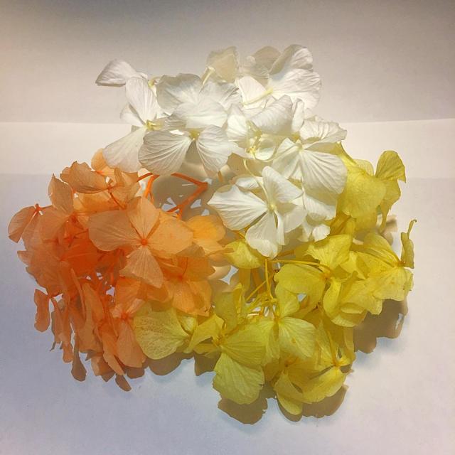 プリザーブドフラワー花材♡黄色オレンジ白 ハンドメイドのフラワー/ガーデン(プリザーブドフラワー)の商品写真