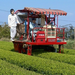 無農薬 和紅茶 国産 お徳用 オーガニック(茶)