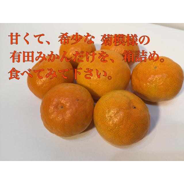 有田みかん お試し価格! 数量限定 食品/飲料/酒の食品(フルーツ)の商品写真