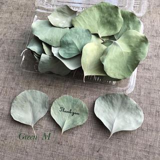 71番◉丸葉が可愛いポポラス・ユーカリの葉セット☆送料無料(ドライフラワー)