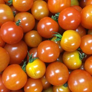 まなちゃんさま専用 ミニトマト 規格外品 3kg(野菜)