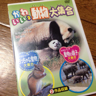 かわいい動物DVD(その他)