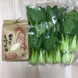 新鮮チンゲンサ&新米3キロ(米/穀物)
