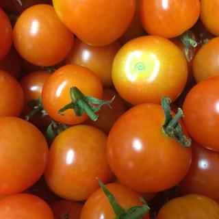 バファリンさま専用 規格外品 ミニトマト 3kg(野菜)