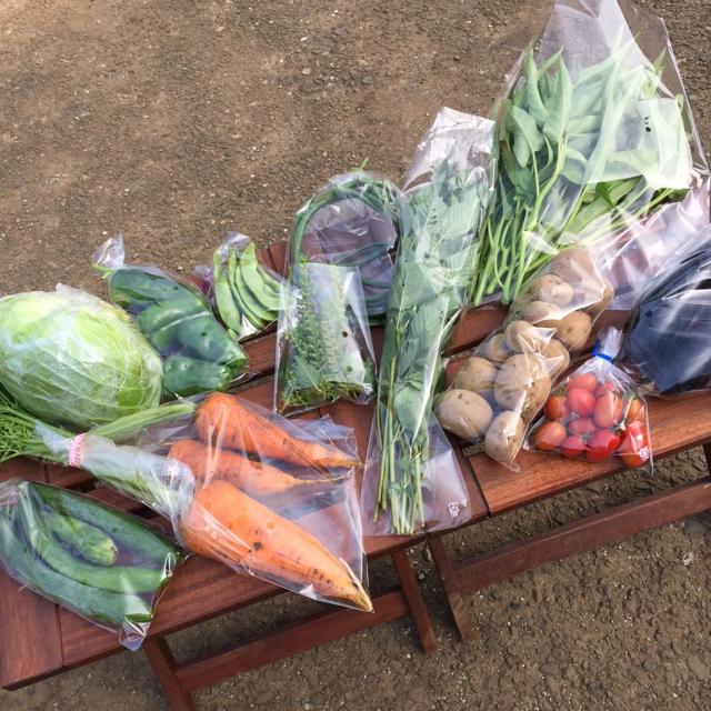 農薬・肥料不使用 野菜セット 「8〜10品」 フリル特別版 食品/飲料/酒の食品(野菜)の商品写真