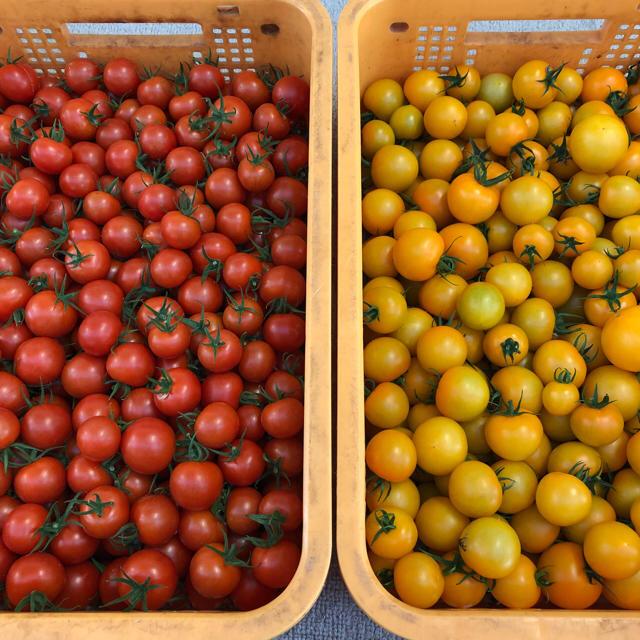 フルーツトマト 1キロ 食品/飲料/酒の食品(野菜)の商品写真
