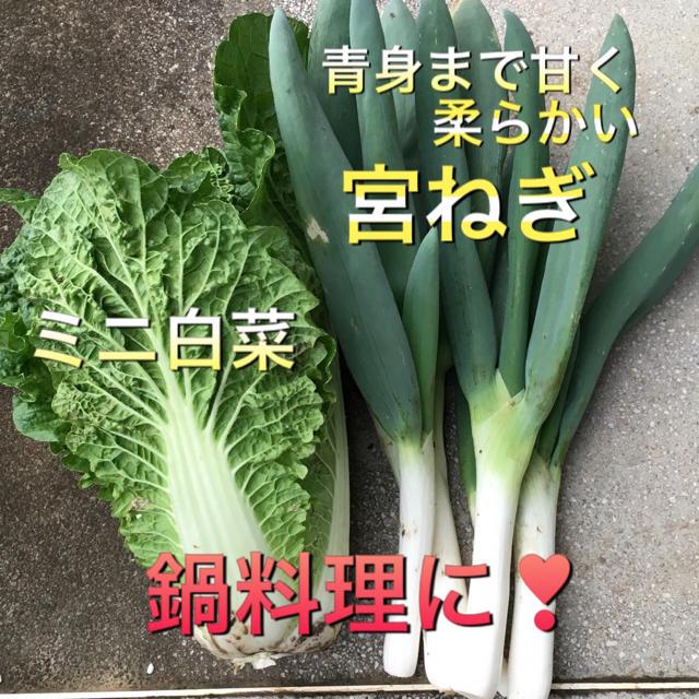 ねぎたっぷり  野菜セット  100 食品/飲料/酒の食品(野菜)の商品写真