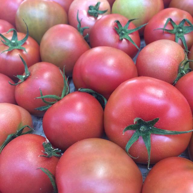 トマトセット 食品/飲料/酒の食品(野菜)の商品写真