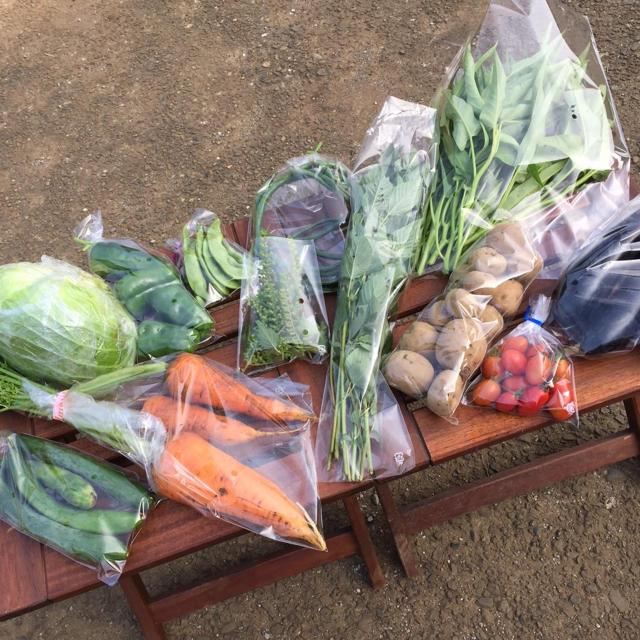 野菜セット 農薬・肥料不使用 「12〜14品」  フリル特別版 食品/飲料/酒の食品(野菜)の商品写真