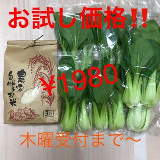 お試し価格!新米3kg&チンゲン菜1kg以上(野菜)