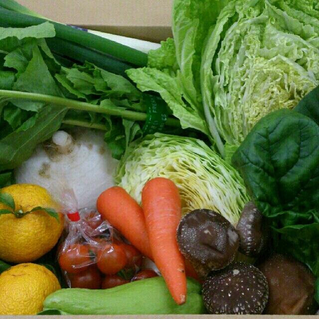 ☆わくわく80サイズ☆岡山産 新鮮野菜 食品/飲料/酒の食品(野菜)の商品写真