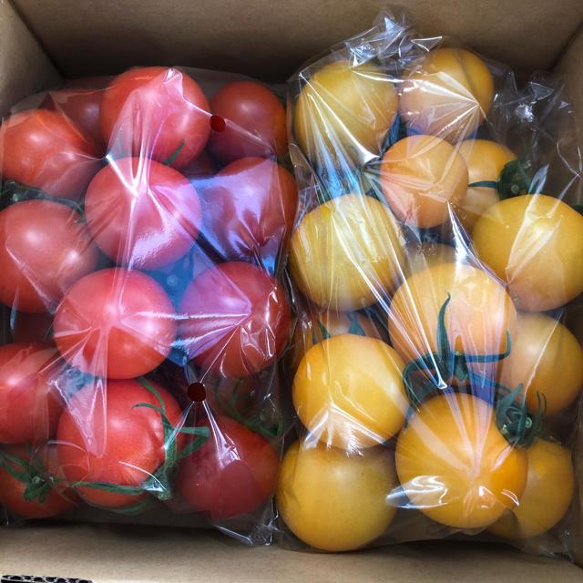 フルーツトマト1キロ 食品/飲料/酒の食品(野菜)の商品写真