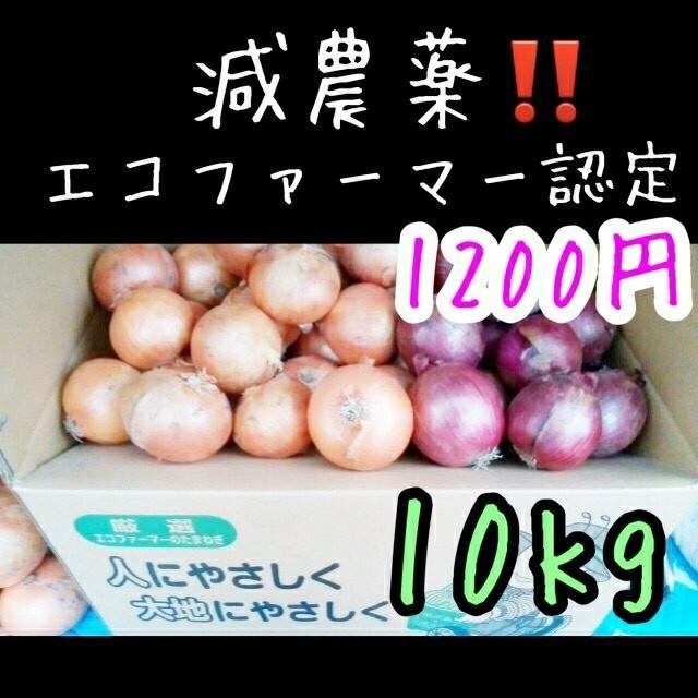 北海道産 減農薬 玉ねぎ&赤玉ねぎセット 食品/飲料/酒の食品(野菜)の商品写真