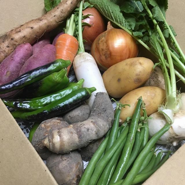 淡路島♡ミニ野菜set 長芋ver 食品/飲料/酒の食品(野菜)の商品写真
