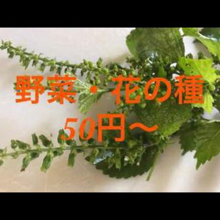 野菜・花の種50円から(野菜)
