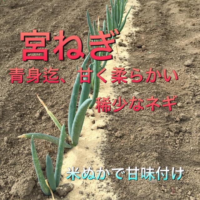 野菜セット   100 食品/飲料/酒の食品(野菜)の商品写真
