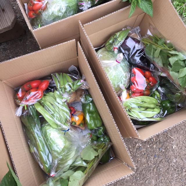 野菜セット 農薬・肥料不使用 「4〜6品」 フリル特別版 食品/飲料/酒の食品(野菜)の商品写真