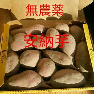 無農薬 安納芋 約1.5kg(野菜)