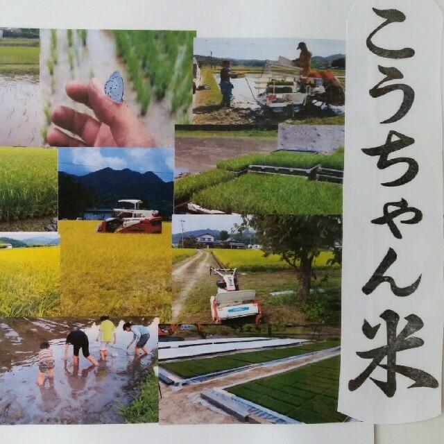 減農薬栽培米 こうちゃん米コシヒカリ 精米1キロ 食品/飲料/酒の食品(米/穀物)の商品写真