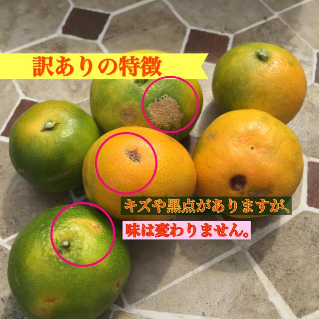 有田みかん訳あり品 10kg  食品/飲料/酒の食品(フルーツ)の商品写真