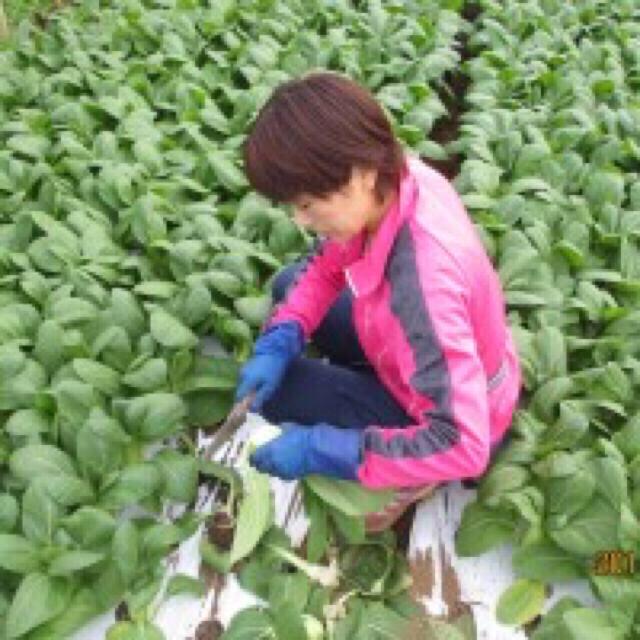 チンゲン菜1キロ以上&野菜セット 食品/飲料/酒の食品(野菜)の商品写真