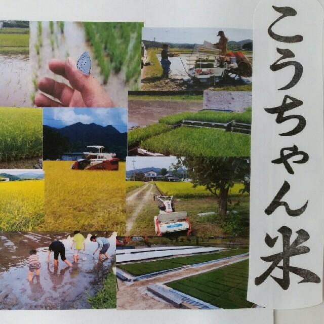減農薬栽培米 こうちゃん米コシヒカリ 精米3キロ 食品/飲料/酒の食品(米/穀物)の商品写真