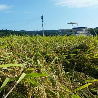 減農薬栽培米 こうちゃん米コシヒカリ 精米3キロ(米/穀物)