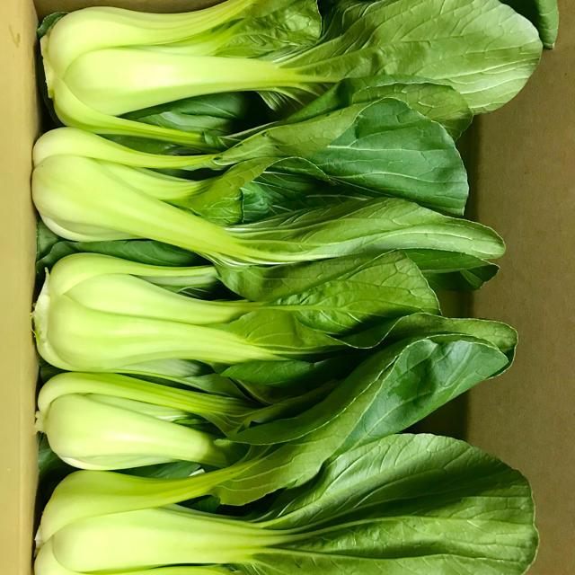 チンゲン菜2.5kg 食品/飲料/酒の食品(野菜)の商品写真