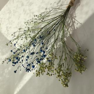 枝付き かすみ草(ドライフラワー)