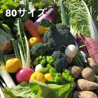 減農薬 新鮮 野菜セット  80(野菜)