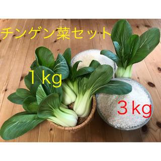 チンゲン菜1kg♪&新米3kg(野菜)
