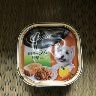 シーザー(CASAR)のワンちゃんのご飯✨(犬)