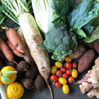 野菜 野菜詰め合わせ LLサイズ(野菜)